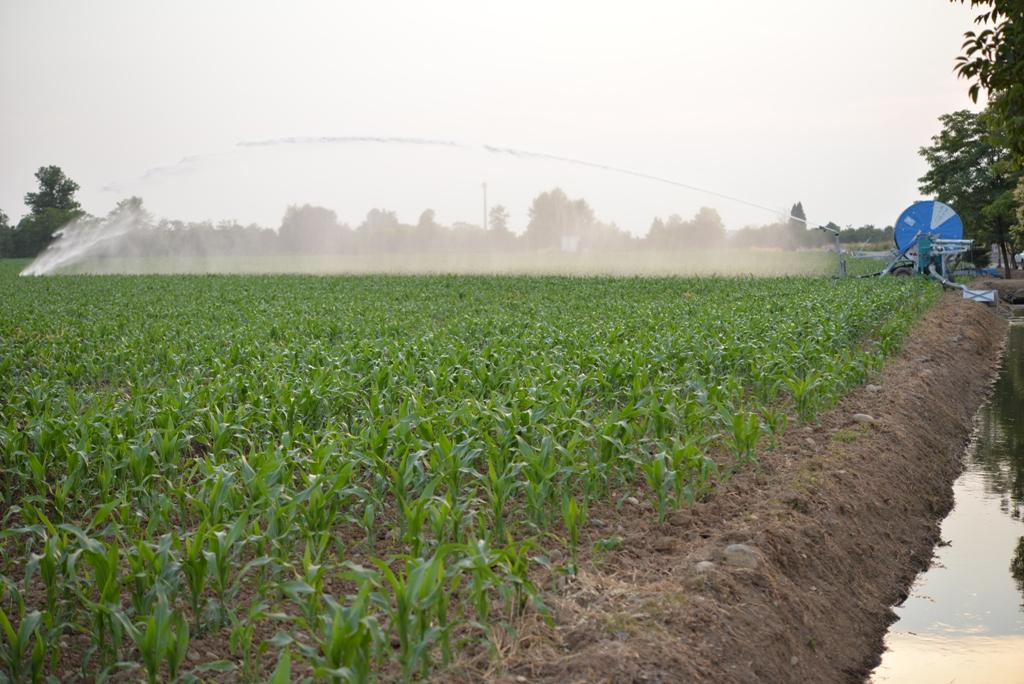 Risparmio idrico e consorzio di bonifica la rassegna for Costo impianto irrigazione a pioggia