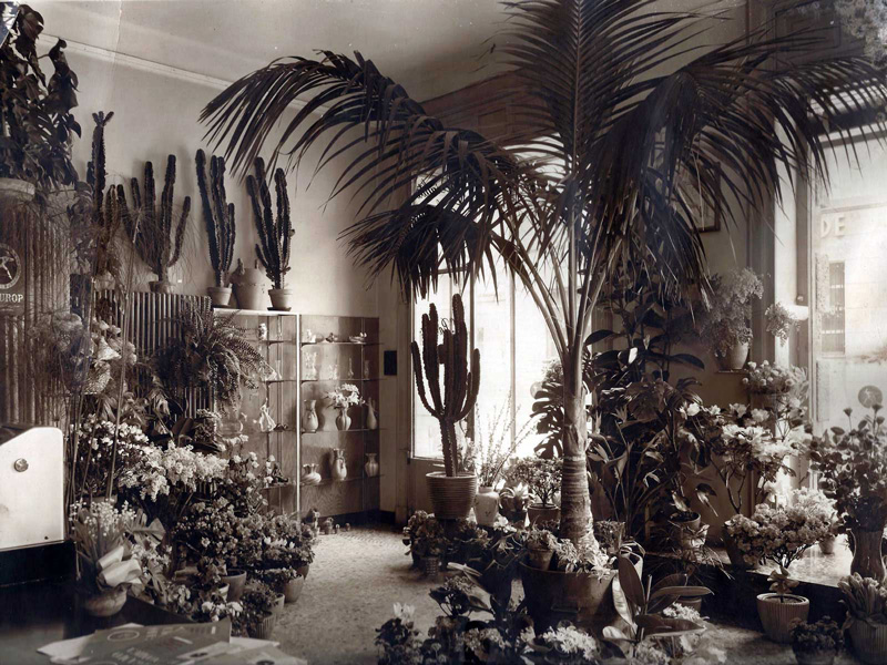 Il premio / Ravasio, il negozio di fiori che fa crescere i papaveri sui Colli