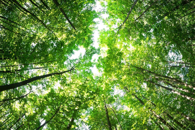 Foraging, quando la spesa si fa nel bosco